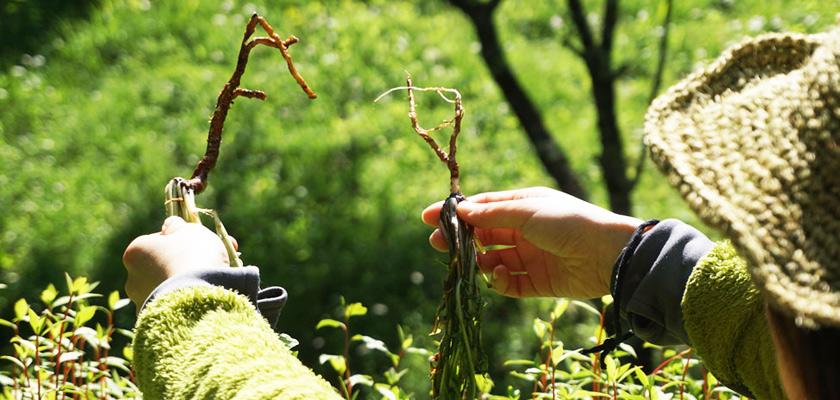 【タンポポ編】アースハーバリスト 初めての薬草&大地のヒーリングに触れる二日間