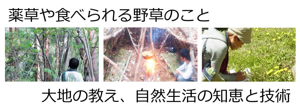 地球生活術 ~ブッシュクラフト、サバイバル術、薬草、自然の教えを学ぶオンライン学習サイト~